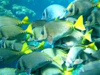 Wed 14feb07 the Bahias di Huatulco snorkeling trip